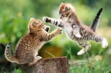 Des combats plus fluides